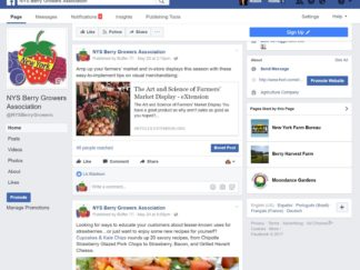 Robin Catalano social media copywriter content strategist consultant