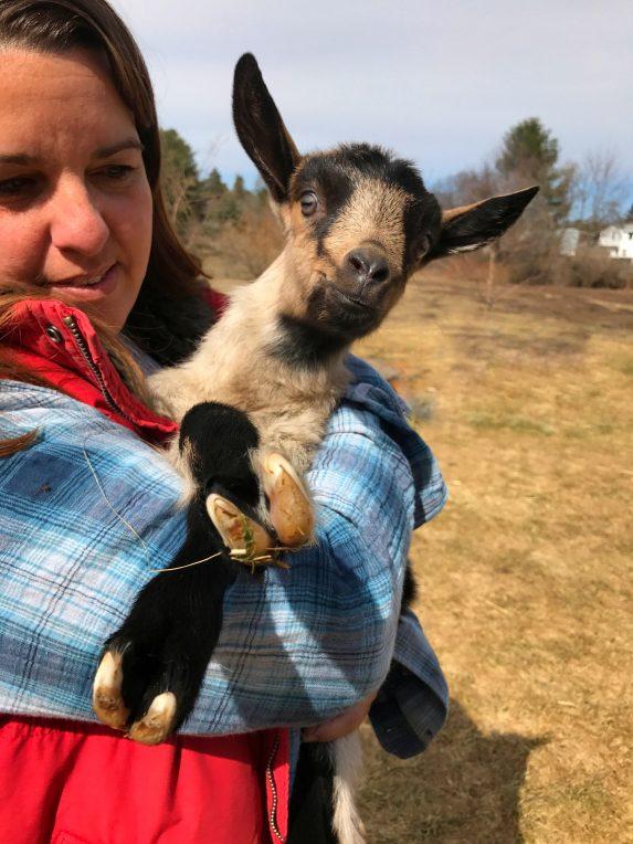 Cara-Petricca-Bluebird-Farm-Cheshire-MA-goat.